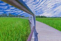 Abstraktes Feld des Weichzeichnungsgrün-ungeschälten Reises mit der Bürgersteigsbrücke am Verbot Chee Tuan, Khuangnai-Bezirk, Ubo Lizenzfreie Stockfotografie