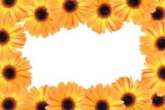 Abstraktes Feld mit orange Blumen Lizenzfreies Stockfoto