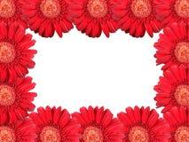 Abstraktes Feld mit roten Blumen Lizenzfreies Stockfoto