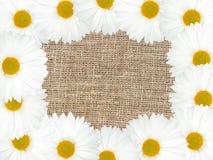 Abstraktes Feld mit weißen Blumen Lizenzfreies Stockbild