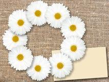 Abstraktes Feld mit weißen Blumen Lizenzfreie Stockbilder