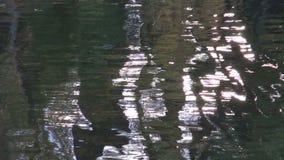 Abstraktes Flusswasser und Baumschattenhintergrund stock footage