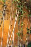 Abstraktes Foto der Bambusanlage Lizenzfreie Stockfotografie