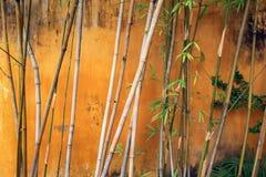 Abstraktes Foto der Bambusanlage Lizenzfreie Stockbilder