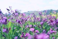 abstraktes Foto der Frühlingswiese mit Wildflowers Stockfoto