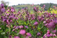 abstraktes Foto der Frühlingswiese mit Wildflowers Lizenzfreie Stockfotos