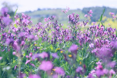 abstraktes Foto der Frühlingswiese mit Wildflowers Stockbilder