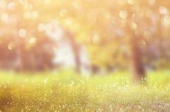 Abstraktes Foto der Lichtexplosion unter Bäumen und Funkeln bokeh beleuchtet Bild wird verwischt und gefiltert lizenzfreie stockfotos