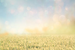 Abstraktes Foto des Weizenfeldes und des hellen Himmels Instagram-Effekt Lizenzfreie Stockfotos