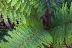 Abstraktes Foto eines Farnbaums mit selektiver Unschärfe Stockfoto