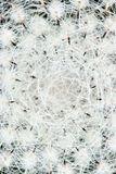 Abstraktes Foto eines Kaktus Lizenzfreies Stockfoto