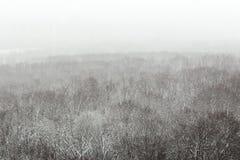 Abstraktes Foto eines Waldes in einem schneebedeckten Blizzard von einer Vogel ` s Augenansicht Lizenzfreie Stockbilder