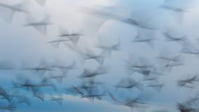 Abstraktes Foto von den Fliegenseemöwen, langes Belichtungsbild Stockbild