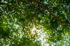 Abstraktes Foto von den Grünblättern und -lichtern Stockfoto