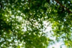 Abstraktes Foto von den Grünblättern und -lichtern Stockfotografie