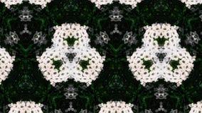 Abstraktes Fotomuster der weißen Blume Stockfotografie