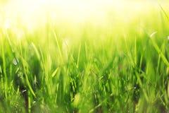 Abstraktes Frühlingshintergrundgras Lizenzfreie Stockbilder