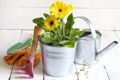 Abstraktes Gartenarbeitkonzept der Blumen und der Gartenwerkzeuge Stockfotos