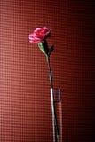 Abstraktes Gartennelken-Hintergrund-Design Lizenzfreies Stockfoto