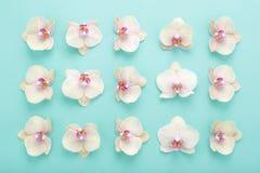 Abstraktes geometrisches Muster von Orchideen blüht auf blauem Hintergrund Lizenzfreies Stockbild