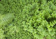 Abstraktes Grün lässt Hintergrund Stockfotos