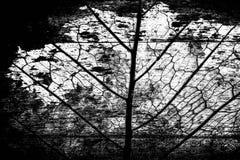 Abstraktes grünes Blatt mit Schmutzholzhintergrund Stockfoto