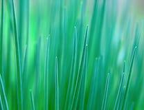 Abstraktes grünes Gras Lizenzfreie Stockbilder
