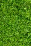 Abstraktes grünes Gras Stockbild