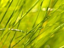 Abstraktes Gras Stockbilder