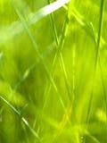 Abstraktes Gras 2 Stockfotos