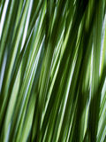 Abstraktes Gras Stockfotografie