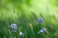 Abstraktes Gras Stockbild