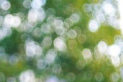 Abstraktes Gras der natürlichen Hintergründe Stockfoto