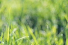 Abstraktes Gras der natürlichen Hintergründe Lizenzfreies Stockfoto