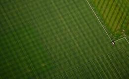Abstraktes Gras-Muster - Antenne Lizenzfreies Stockbild