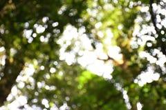Abstraktes Grün Bokeh kreist natürliche Farbwarmen Hintergrund mit Kopienraum ein Stockfotografie