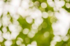 Abstraktes Hintergrundgrün-Natur bokeh Lizenzfreie Stockbilder