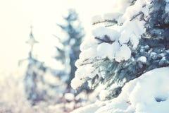 Abstraktes Hintergrundmuster der weißen Sterne auf dunkelroter Auslegung Baum des neuen Jahres unter dem Schnee auf der Straße Stockfoto