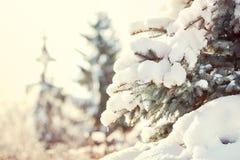 Abstraktes Hintergrundmuster der weißen Sterne auf dunkelroter Auslegung Baum des neuen Jahres unter dem Schnee auf der Straße Lizenzfreies Stockbild