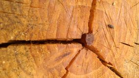 Abstraktes Holz Lizenzfreie Stockbilder