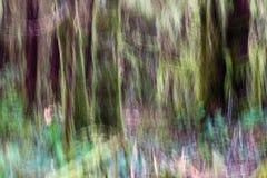Abstraktes, Impressionist Ähnliches Bild des moosigen Regenwaldes Stockfotografie