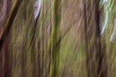 Abstraktes, Impressionist Ähnliches Bild des moosigen Regenwaldes nahe Tofino, BC Lizenzfreie Stockfotos