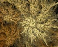 Abstraktes künstliches computererzeugtes wiederholendes Flamme Fractal-Kunstbild eines gewundenen Shells Stockfotos