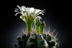 Abstraktes Kaktus-Insel-Paradies Lizenzfreie Stockfotos