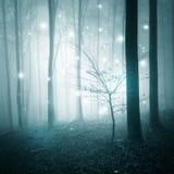Abstraktes Licht im Wald Lizenzfreies Stockfoto
