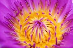 Abstraktes Lotus lizenzfreie stockbilder