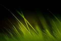 Abstraktes Makro des Pelzes in den grünen Tönen Lizenzfreies Stockfoto