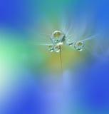 Abstraktes Makrofoto mit Wassertropfen Stockbild