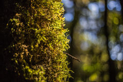 Abstraktes Moos auf Baum Stockbild