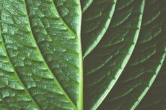 Abstraktes Muster eines grünen Blattes Stockbilder